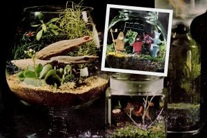 Tiny terrariums Vintage ideas for gardens and more decor under glass
