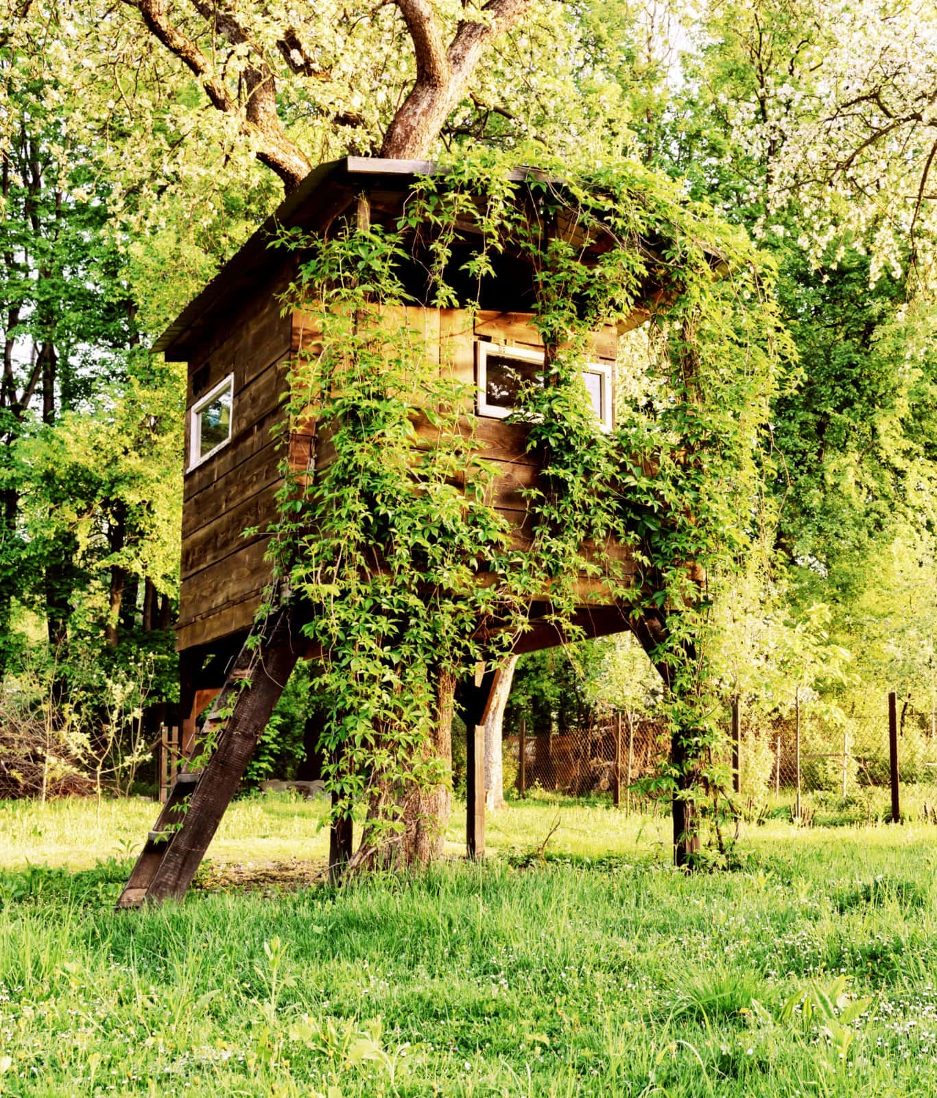 Treehouse built around a tree