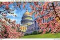 U. S. Capitol through the Cherry Blossoms, Washington, DC vintage postcard
