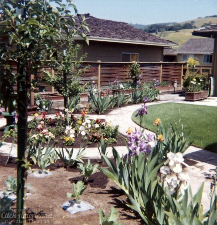 Vintage 1970s house in Santa Rosa California - Backyard (4)