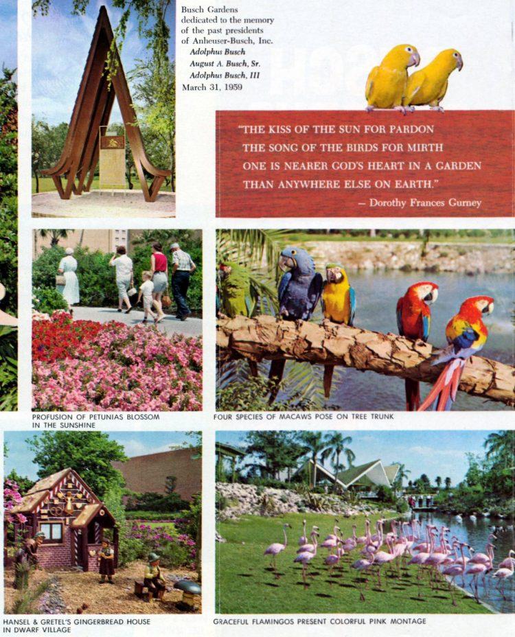 Vintage Busch Gardens - Tampa Florida 1960 (4)