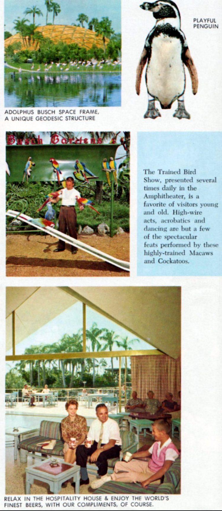 Vintage Busch Gardens - Tampa Florida 1960 (5)