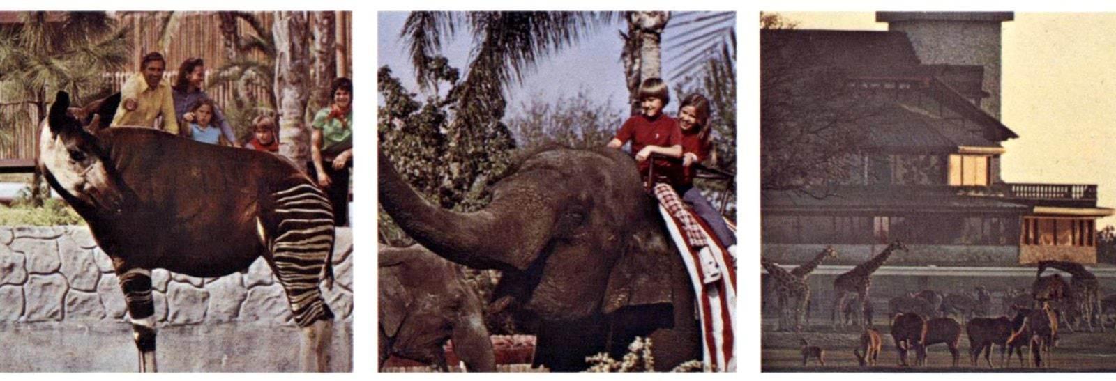 Vintage Busch Gardens in the 1970s (4)