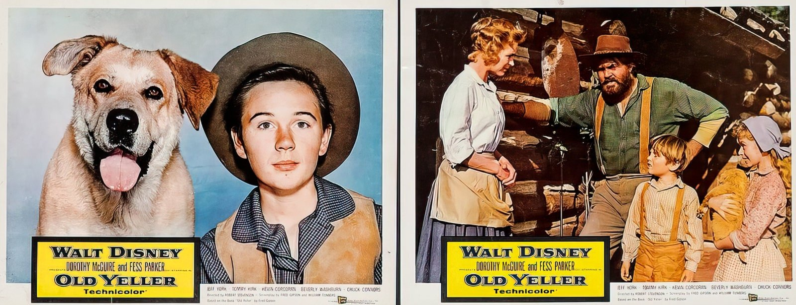 Vintage Old Yeller movie scenes from the 1950s (1)