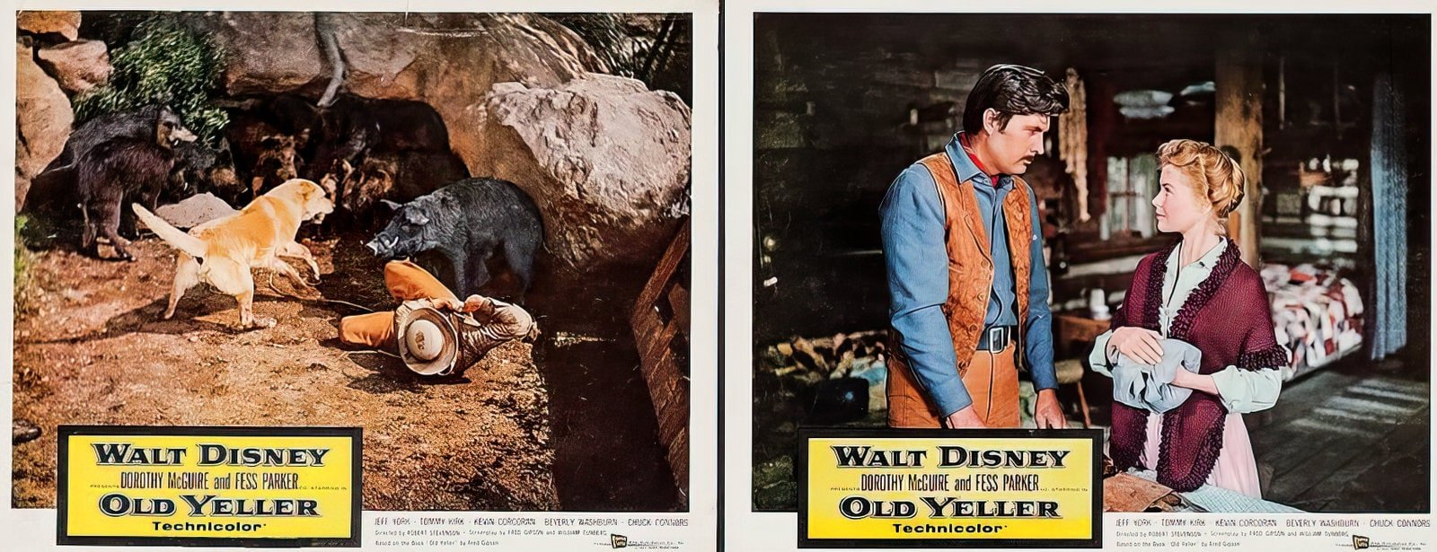 Vintage Old Yeller movie scenes from the 1950s (4)