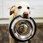 Vintage dog food with cute dog