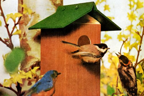 Vintage milk carton bird house craft