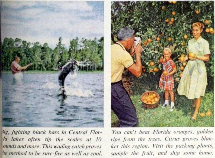 Vintage natural wonders of Central Florida (1961)