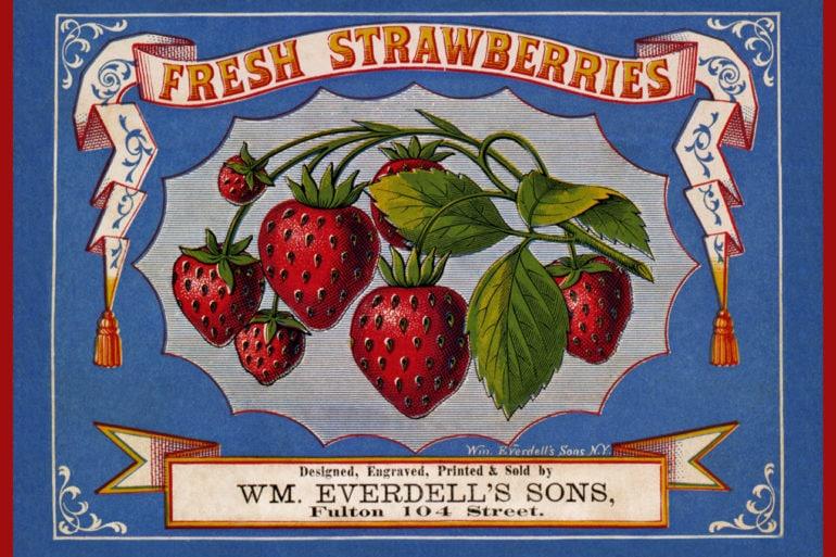 Vintage sign - Fresh strawberries