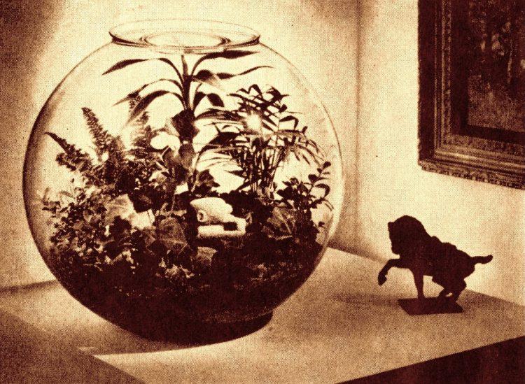 Vintage terrarium ideas from 1971 (1)