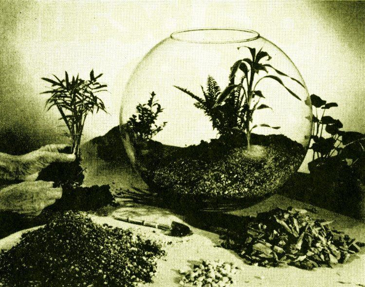 Vintage terrarium ideas from 1971 (2)
