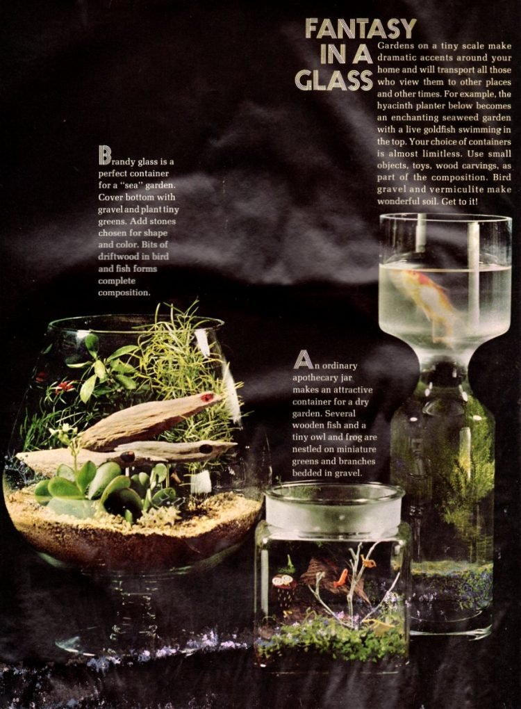 Vintage terrariums from 1966 (1)