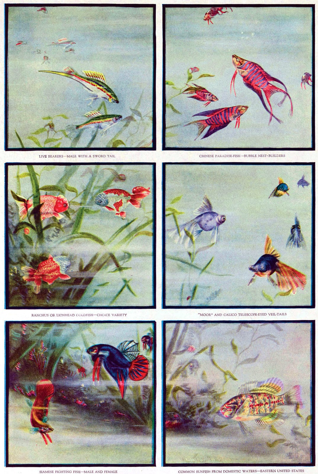 Vintage tropical fish panel illustrations from 1919