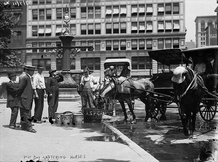 Watering horses on a hot day in NYC