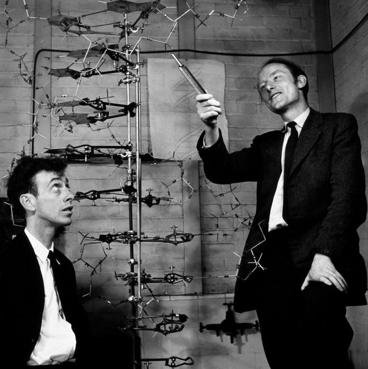 Watson and Crick discover and model DNA
