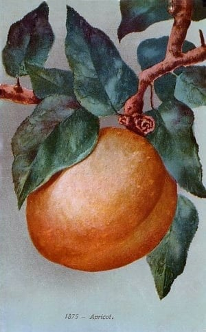 5 fruit desserts: Apples, prunes & apricots (1919)