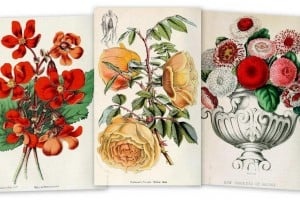 Old-fashioned New Year's flower meanings (1897)