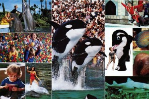 Sea World San Diego in the '70s & '80s, when you could see Shamu the killer whale, dolphins & lots more