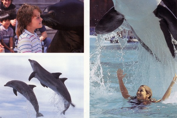 Marine World Africa USA: See the old California theme park that had killer whales & dolphins