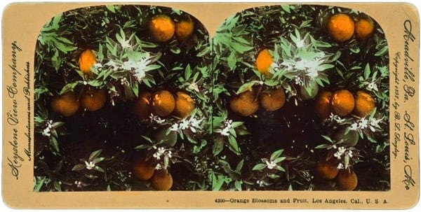 4 juicy orange dessert recipes (1897)