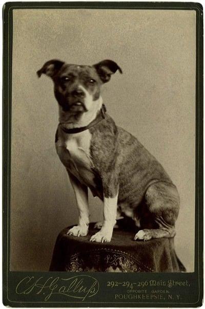 No more rabies (1885)