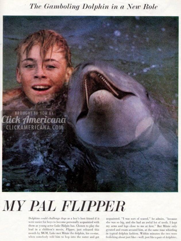 flipper-life-1963 (1)