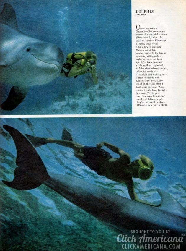 flipper-life-1963 (3)