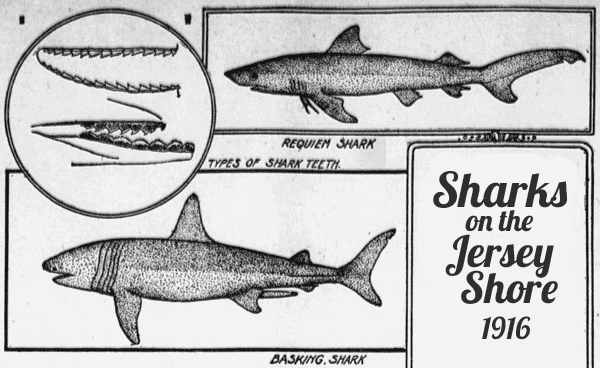 Why The Man Eating Sharks Off Jersey Coast 1916