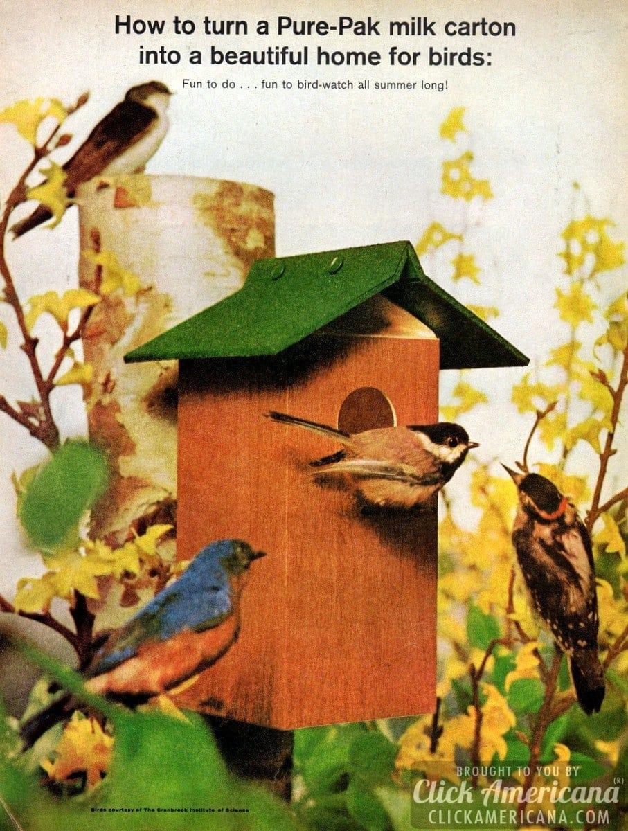 Make a milk carton bird house (1964)