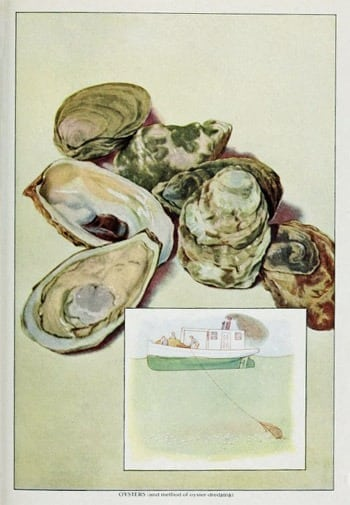 10 oyster recipes (1882)