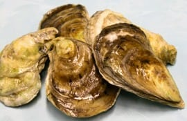 Oyster bisque recipe (1893)