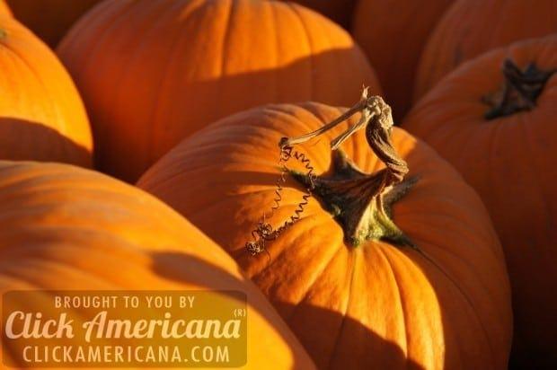 5 different American twists on classic Pumpkin Pie (1979)