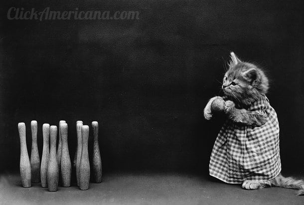silly-vintage-cats-c1914 (1)