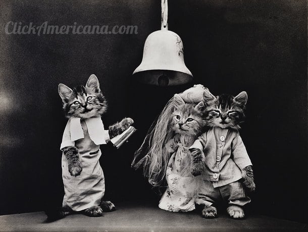 silly-vintage-cats-c1914 (2)