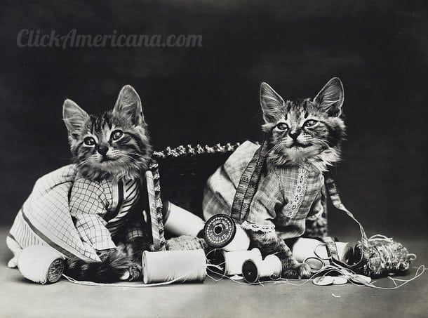 silly-vintage-cats-c1914 (3)