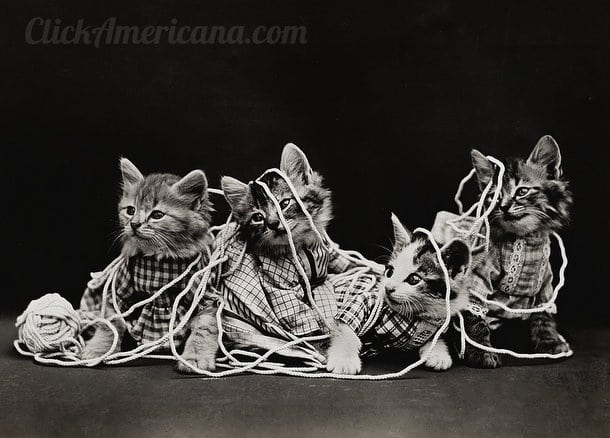 silly-vintage-cats-c1914 (6)