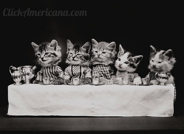 silly-vintage-cats-c1914 (7)