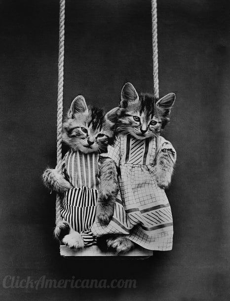 silly-vintage-cats-c1914 (8)