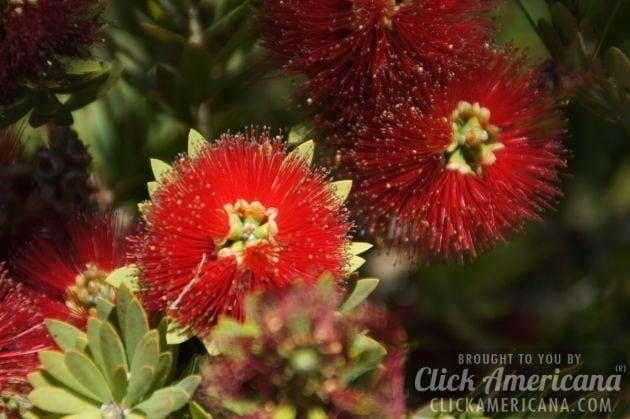 springtime-in-arizona-march-2014 (1)