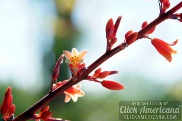 springtime-in-arizona-march-2014 (12)