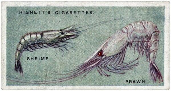 How to shell shrimp (1904)